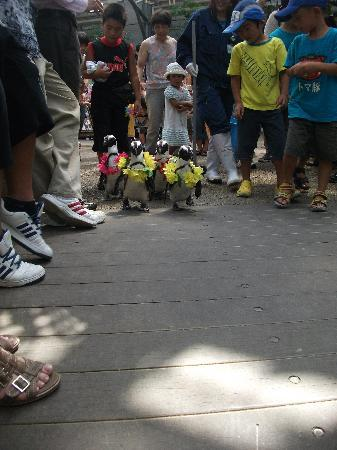 Matsue Vogel Park: Penguin Parade