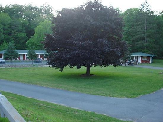 Roscoe Motel: Motel