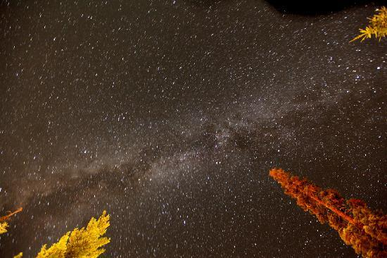 Wuksachi Lodge: The Milky Way above our room