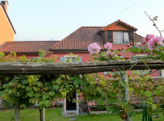 Villa sempreverde : Back garden, vine arbour and roses