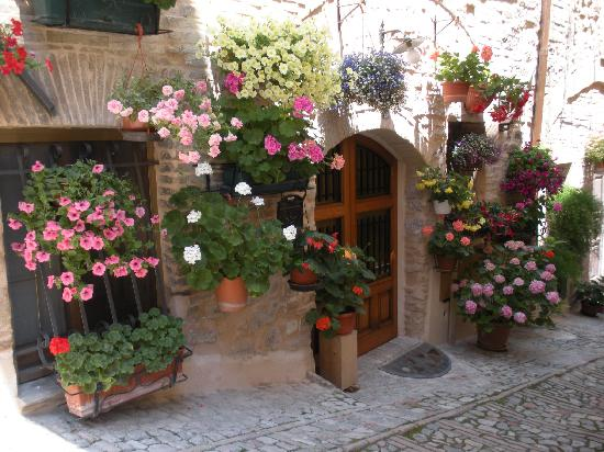 Village Flowers in Spello