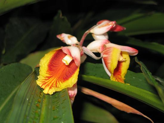 Sendero Panama Tours: Tropical flowers