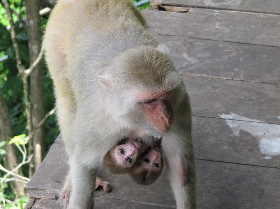 Loei, Thailand: monkey tempel