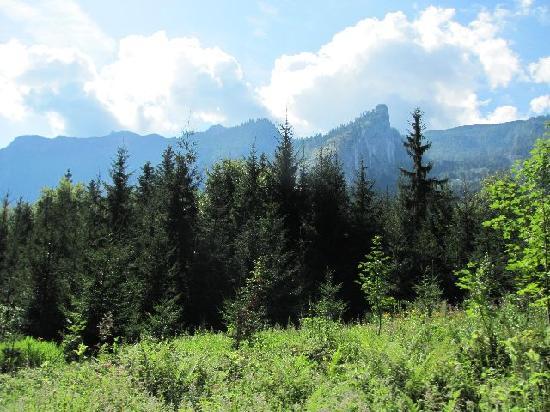 Gastehaus Waldeck: panorama