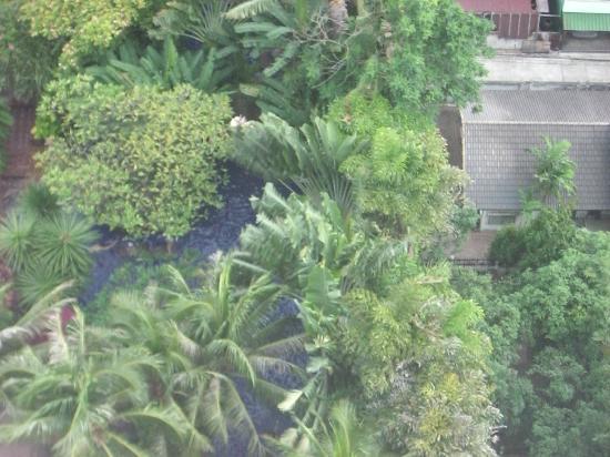 โรงแรมเชอราตัน แกรนด์ สุขุมวิท: 部屋よりプール