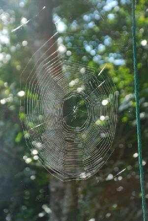Mount Tutu Eco-Sanctuary: Spider web