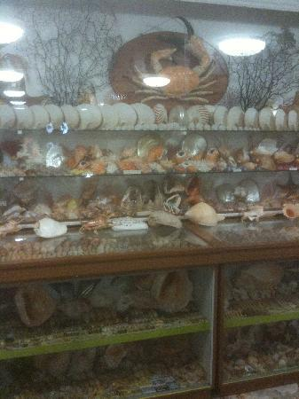 Bellview Shell Collection: One mans love of collecting