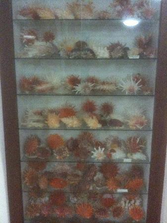 Bellview Shell Collection: Treasures from the deep