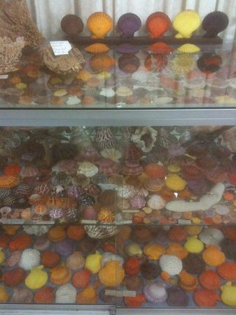 Bellview Shell Collection