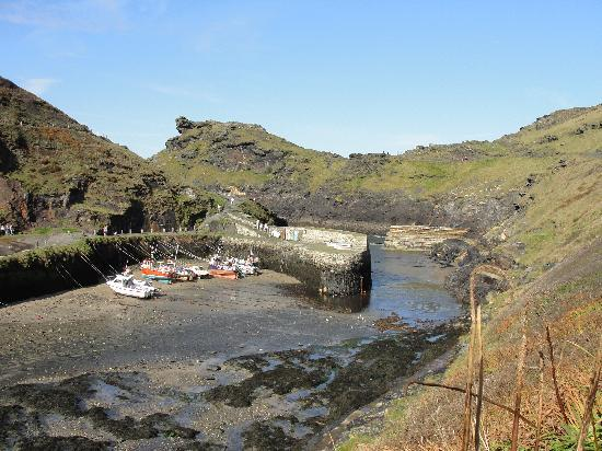 The Old Parsonage: Boscastle harbour- can you spot the seals? a 5 min stroll along the cliff tops