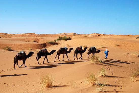 Sahara Day Tours