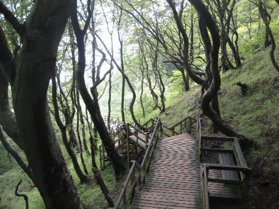 Moen, Danimarca: Steps