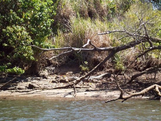 The Bama Way Aboriginal Journeys: crocodile