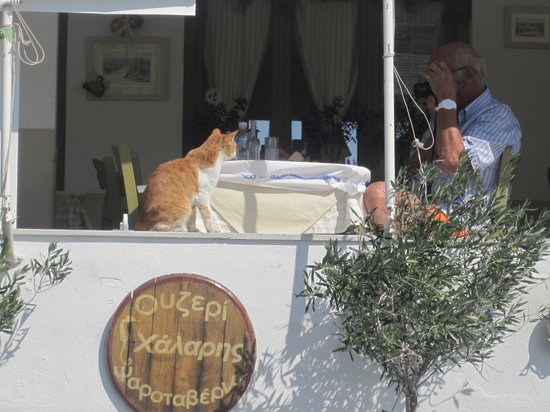 Piso Livadi, Grekland: cats like good food as well!