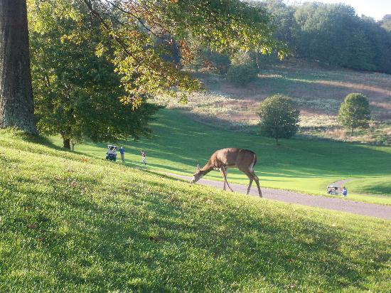 Wilson Lodge at Oglebay Resort & Conference Center: Lots of deer everywhere!