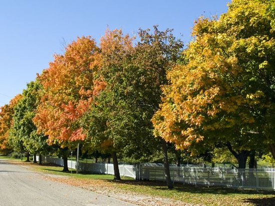 The Gallery Inn : Autumn in Bishop Hill ...