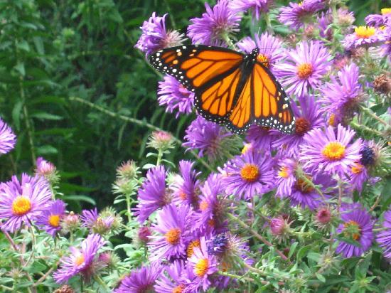 Λίνκολν, Νεμπράσκα: butterfly