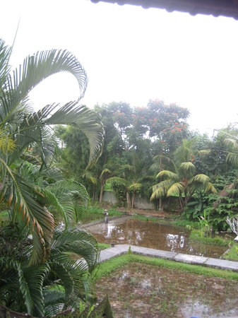 Gerebig Bungalows: View of paddies and pool from my bungalow.