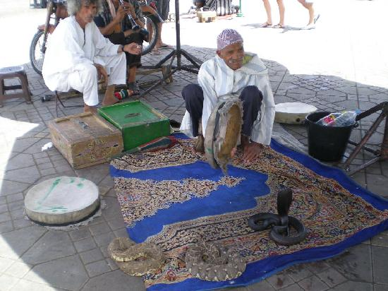 Travel Exploration Morocco Private Tours: ..snakes in Marrakesh.