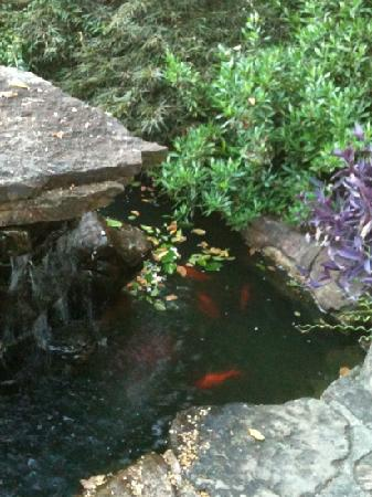Lookout Point Lakeside Inn: fish pond