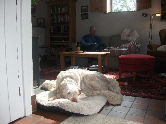 Tom's Barn and Douglas's Barn: A very happy dog