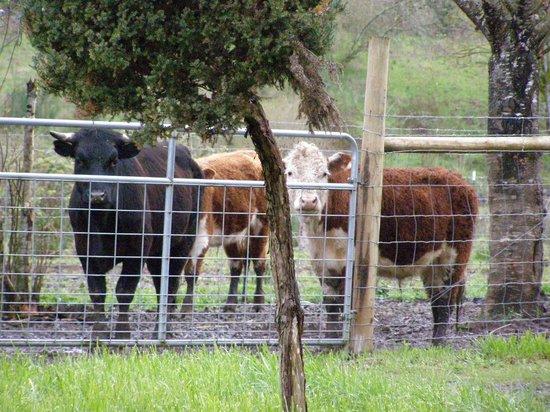 piemont: steaks, roast beef, hamburger all natural grown