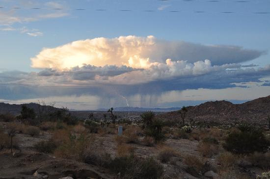 Desert Lily: Desert Storm