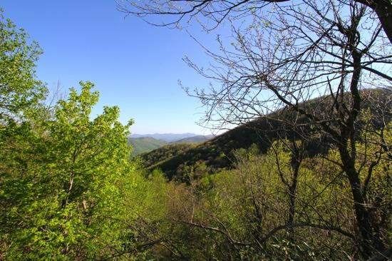 Chattahoochee National Forest: view from Richard Russell Hwy