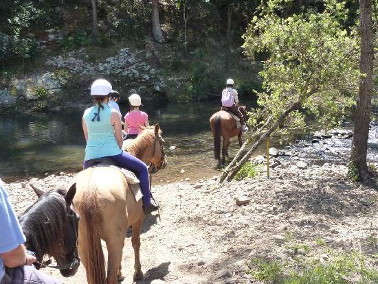 "Riviera B&B: Numinbah Stables, ""Creek Crossing"""