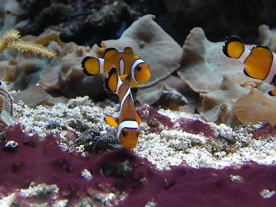 Deep Sea World : Clownfish