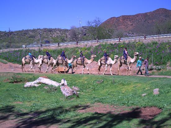 Wilgewandel Holiday Farm: camel rides
