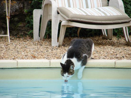 Aux Anges Gardiens : Lucky Boy met zijn zwembad