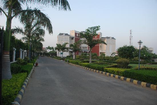 Paradise Green: Enter