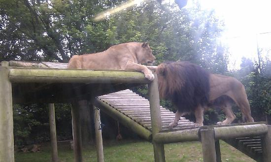 Newquay Zoo: Lions Den