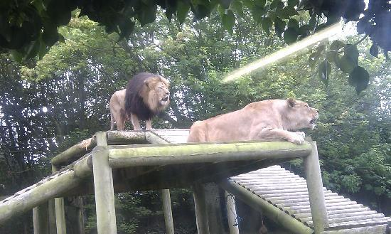 Newquay Zoo: Loved every moment spent with this brothers...