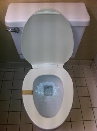 Quality Inn: bandaide toilet