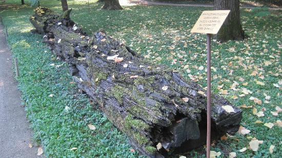 Orto Botanico di Padova: orto botanico 1
