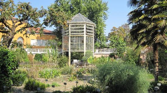 palma di Goethe - Picture of Orto Botanico di Padova, Padua ...