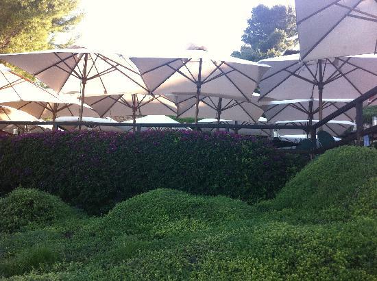 Hotel Il Pellicano: giardini