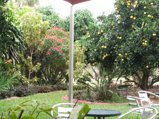 Jaques Coffee Plantation: garden area