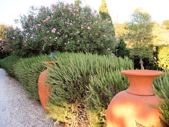 "Locanda ""Il Poderino"": A healthy hedge of rosemary along the driveway"