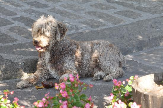 Casa de San Martin: Turko (sp?) the friendly Spanish Water Dog