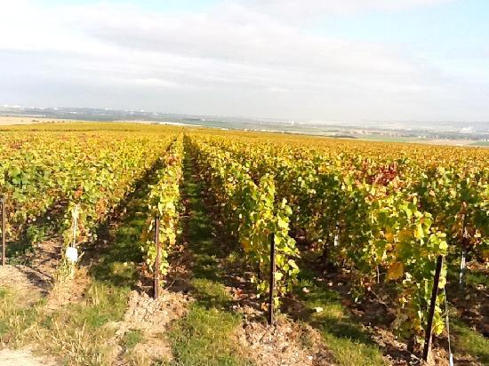 Les Molyneux: Vineyards in the Autumn