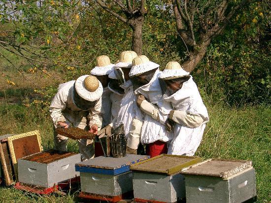 Estancia La Catita: actividades de apicultura