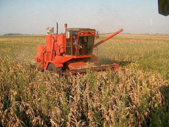 Estancia La Catita: cosecha