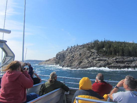 Bar Harbor Whale Watch Company: Thunder Hole from the boat