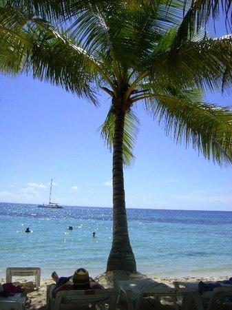 Isla Saona: Paradise.