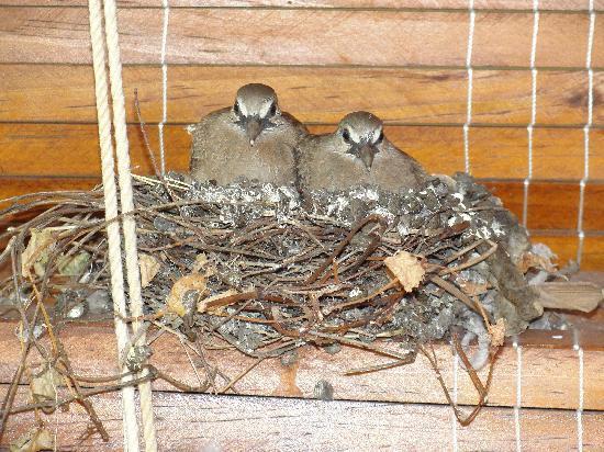 Casa Cubana: Birds Paradise