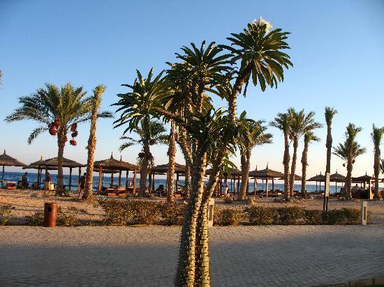 Coral Sea Sensatori - Sharm El Sheikh: The beach
