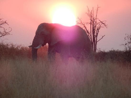 Belmond Savute Elephant Lodge: African Sunset